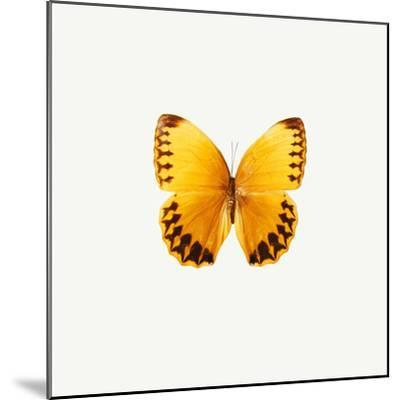Yellow Butterfly-PhotoINC-Mounted Photographic Print