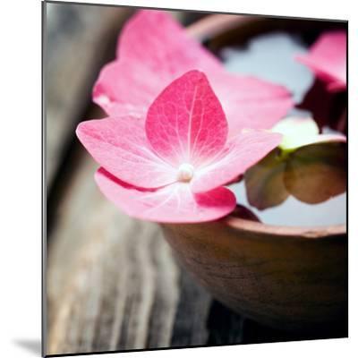 Zen Bowl--Mounted Photographic Print