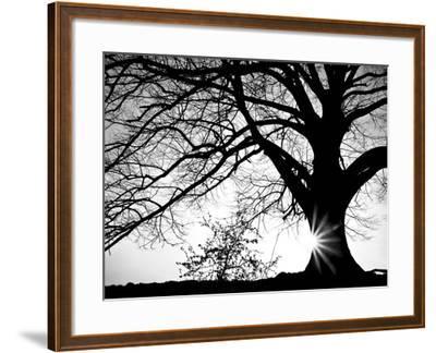 Old Tree-PhotoINC-Framed Photographic Print