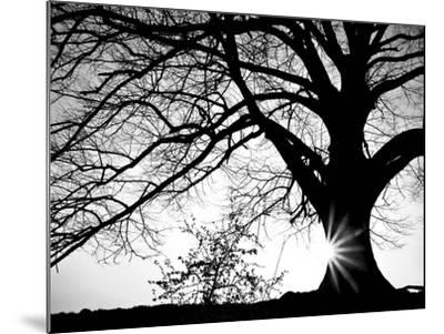 Old Tree-PhotoINC-Mounted Photographic Print