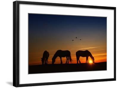Fly Over-PH Burchett-Framed Photographic Print