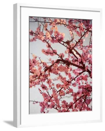 Cherry Blossoms II-Susan Bryant-Framed Photographic Print