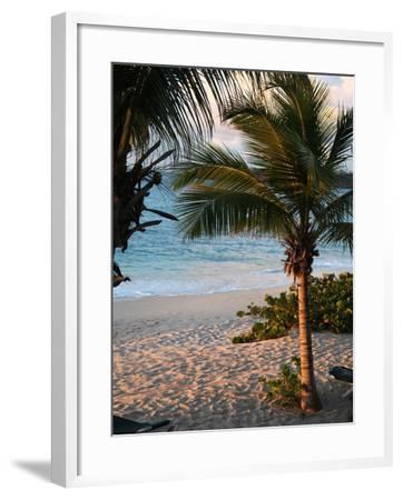 Sunset Palms II-Susan Bryant-Framed Photographic Print