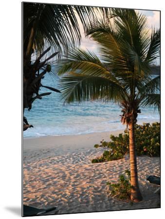 Sunset Palms II-Susan Bryant-Mounted Photographic Print