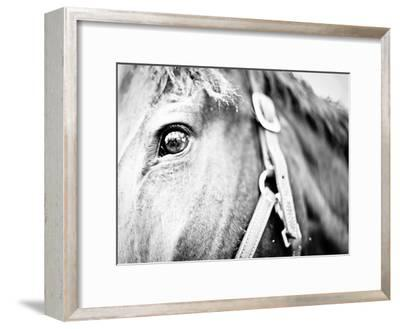 Horseback Riding I-Susan Bryant-Framed Photographic Print