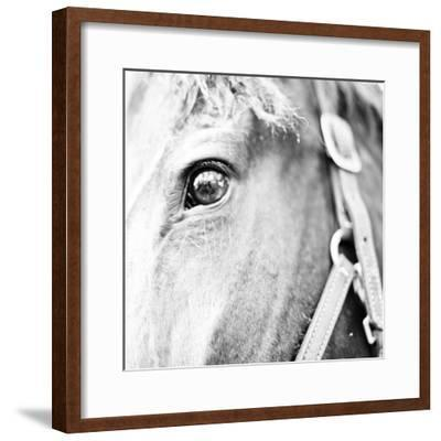 In the Stable I-Susan Bryant-Framed Photographic Print