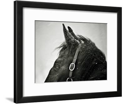 Snow Daze IV Crop-Lisa Cueman-Framed Photographic Print