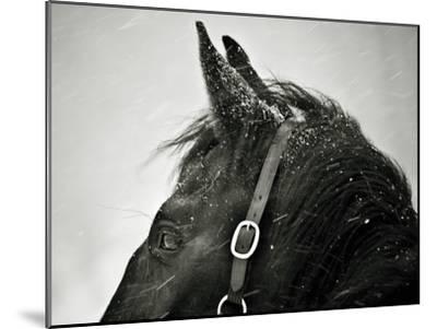 Snow Daze IV Crop-Lisa Cueman-Mounted Photographic Print