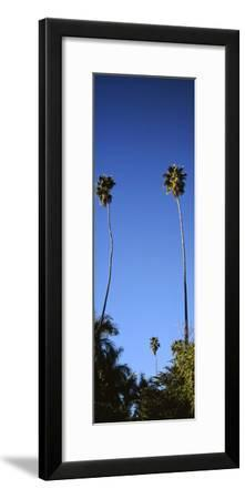 Palm Trees, Sinaloa, Baja California-Barry Herman-Framed Photographic Print