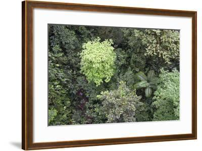 A Birds-Eye-View of Different Shades of Green from Trees Making Up the Forest-Stacy Bass-Framed Photographic Print