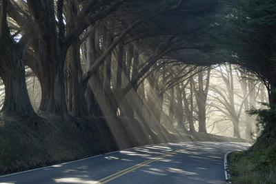 County Road with Sunlight Filtering in Through the Trees, Mendocino, California, Usa-Natalie Tepper-Photographic Print