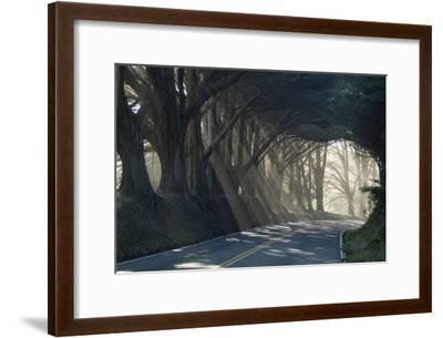 County Road with Sunlight Filtering in Through the Trees, Mendocino, California, Usa-Natalie Tepper-Framed Photographic Print