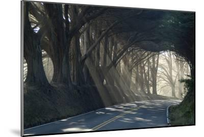 County Road with Sunlight Filtering in Through the Trees, Mendocino, California, Usa-Natalie Tepper-Mounted Photographic Print