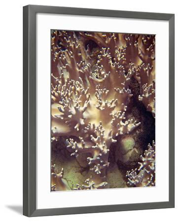 Barrier Reef Coral I-Kathy Mansfield-Framed Photographic Print