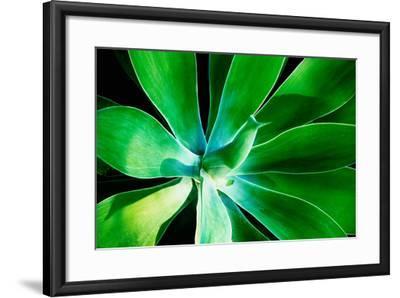 Green Intrigue-Bruce Nawrocke-Framed Photographic Print