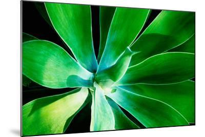 Green Intrigue-Bruce Nawrocke-Mounted Photographic Print