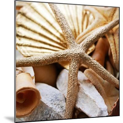 Gold Starfish II-Susan Bryant-Mounted Photographic Print