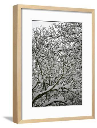 Trees in Snow-Benedict Luxmoore-Framed Photographic Print