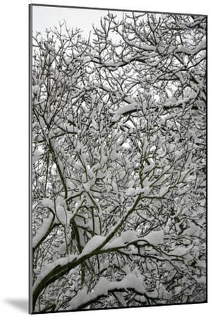 Trees in Snow-Benedict Luxmoore-Mounted Photographic Print