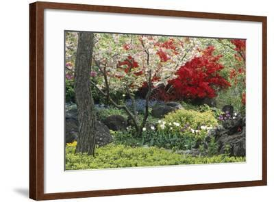 Spring Garden with Red Leaves on Tree and Blossom-Michael Freeman-Framed Photographic Print