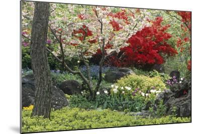 Spring Garden with Red Leaves on Tree and Blossom-Michael Freeman-Mounted Photographic Print