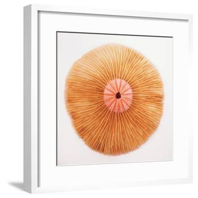 Ocean Finds II-Jairo Rodriguez-Framed Photographic Print