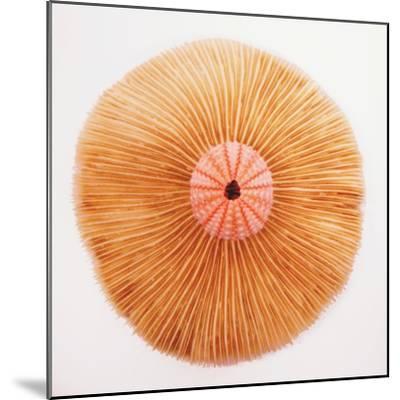 Ocean Finds II-Jairo Rodriguez-Mounted Photographic Print