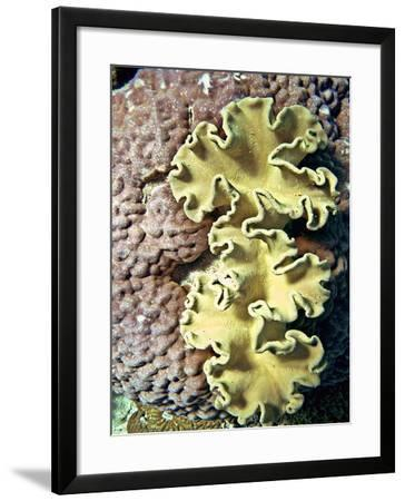 Barrier Reef Coral IV-Kathy Mansfield-Framed Photographic Print