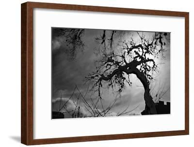 Spooky Tree--Framed Photo