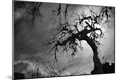 Spooky Tree--Mounted Photo