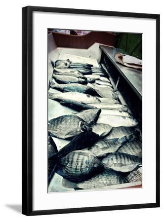 Tokyo Fish Market--Framed Photo
