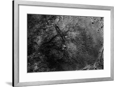 Tree Reflection in Puddle--Framed Photo