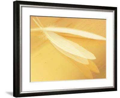 White Feathers on Yellow Background--Framed Photographic Print