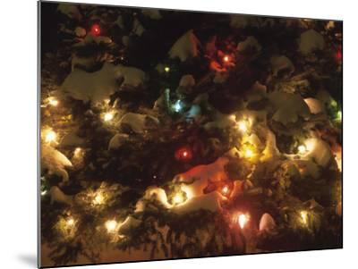 Christmas Lights on Snowy Evergreen Branches--Mounted Photographic Print