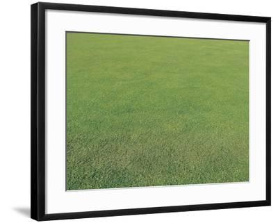 Lush Green Grass--Framed Photographic Print