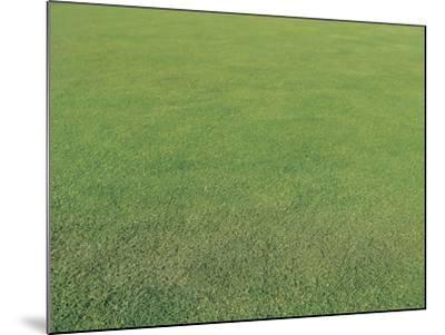 Lush Green Grass--Mounted Photographic Print