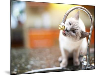 Cat Sitting on Counter and Licking Drops of Water from Kitchen Faucet--Mounted Photographic Print
