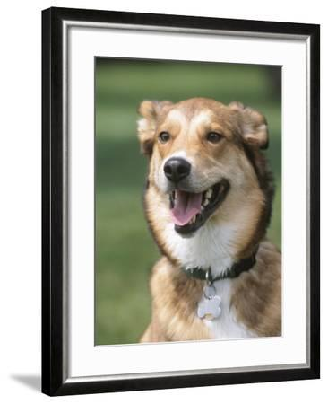 Cute Panting Dog--Framed Photographic Print
