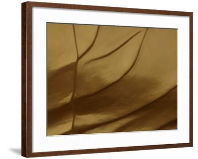 Close-up of Sculpted and Painted Wrinkly Golden Texture--Framed Photographic Print