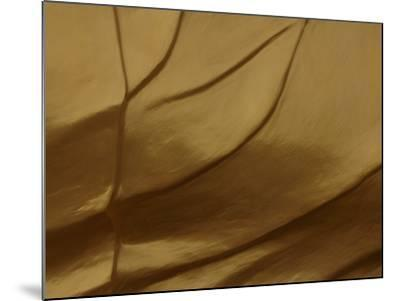 Close-up of Sculpted and Painted Wrinkly Golden Texture--Mounted Photographic Print