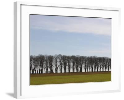 An Expanse of Blue Sky Above a Row of Bare Trees and Green Grass--Framed Photographic Print