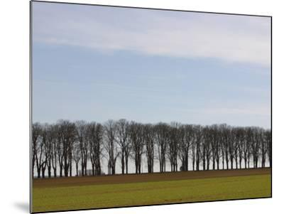 An Expanse of Blue Sky Above a Row of Bare Trees and Green Grass--Mounted Photographic Print