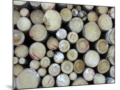 A Large Pile of Frozen Cut Logs with Snow--Mounted Photographic Print