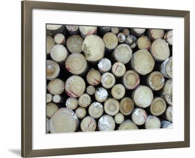 A Large Pile of Frozen Cut Logs with Snow--Framed Photographic Print