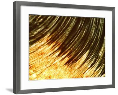 Close-up of Colorful Paint in a Circular Pattern--Framed Photographic Print