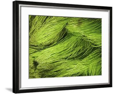 Textured Background--Framed Photographic Print
