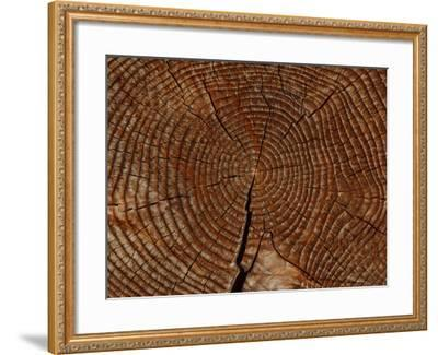 Close-up of the Rings and Cracks of Texture on a Cut Log--Framed Photographic Print