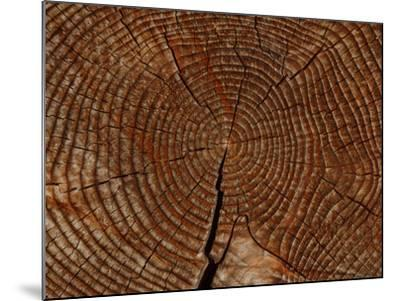 Close-up of the Rings and Cracks of Texture on a Cut Log--Mounted Photographic Print