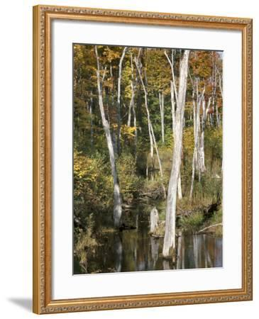 Deadwood Trees Along Scenic Lakeshore--Framed Photographic Print