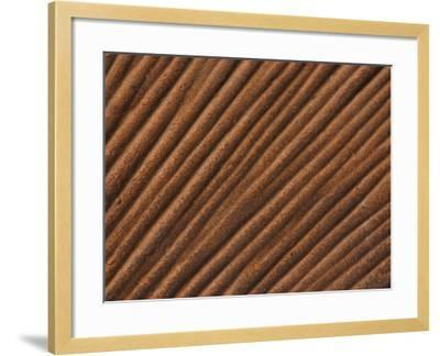 Close-Up of Grooved Pattern and Texture in Wood--Framed Photographic Print